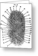 Fingerprint Diagram, 1940 Greeting Card by Science Source