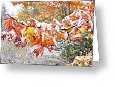 First Snow Greeting Card by Thomas R Fletcher