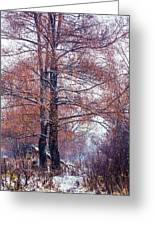 First Snow. Winter Coming Greeting Card by Jenny Rainbow