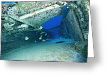 Fish Swimming In Shipwreck, Tortola Greeting Card by Joe Stancampiano
