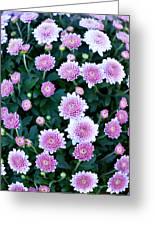 Fisheye Of Pink Flowers Greeting Card by Malania Hammer