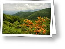Flame Azalea Greeting Card by Michael Hodges