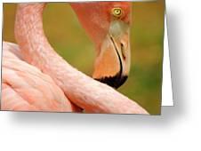 Flamingo Greeting Card by Carlos Caetano