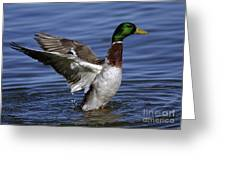 Flapping At Dusk Greeting Card by Inspired Nature Photography By Shelley Myke