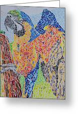 Flapping Color Greeting Card by Steve Teets