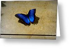 Flawed Beauti-fly Greeting Card by Nicole Tru Photography