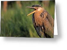 Fledgling Great Blue Heron Greeting Card by Natural Selection Bill Byrne
