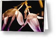 Floral Blend Greeting Card by David Patterson