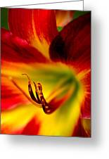 Floral Macro Of A Blossom Greeting Card by Floyd Menezes