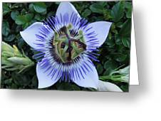Floral Passion Greeting Card by Eric Kempson