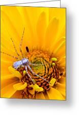 Floral Spider Greeting Card by Mark J Seefeldt