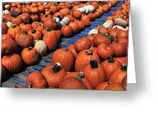 Florida Gator Pumpkins Greeting Card by David Lee Thompson