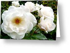 Flourishing Iceberg Roses Greeting Card by Will Borden