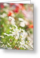 Flower Meadow Greeting Card by Elena Elisseeva