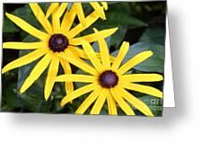 Flower Rudbeckia Fulgida In Full Greeting Card by Ted Kinsman