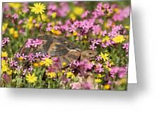 flowering Around turtle Greeting Card by Alon Meir