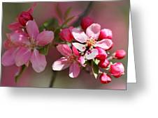 Flowering Crabapple Detail Greeting Card by Mark J Seefeldt