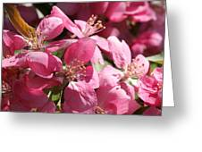 Flowering Crabapple In Bloom Greeting Card by Mark J Seefeldt
