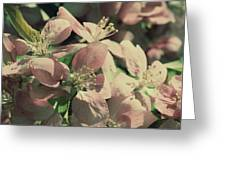 Flowering Crabapple Muted Greeting Card by Mark J Seefeldt