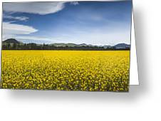 Flowering Mustard Crop In Canterbury Greeting Card by Colin Monteath