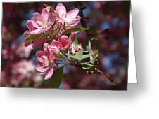 Flowering Pink Dogwood Greeting Card by Frank Mari