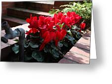 Flowers And Water Spout Greeting Card by Luke Robertson