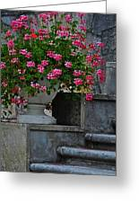 Flowers On The Steps Greeting Card by Mary Machare