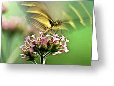 Fluttering Butterfly Greeting Card by Heiko Koehrer-Wagner