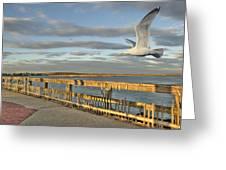 Fly Bye Greeting Card by David Clark