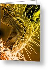 Fly Proboscis, Sem Greeting Card by Biomedical Imaging Unit, Southampton General Hospital