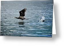 Flying Cormorant Bird Greeting Card by Mats Silvan