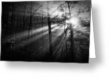 Foggy Forest Greeting Card by Matt  Trimble
