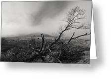 Foggy Grapevine Greeting Card by Richard Leon