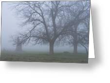 Foggy Morning Greeting Card by Randy Bayne