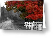 Foliage And Black And White Greeting Card by Tammy Collins