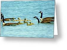 Follow The Leader Greeting Card by Karen Wiles