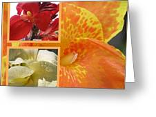 For The Love Of A Canna Greeting Card by Sandi Floyd