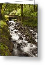 Forest Bridge - Columbia River Gorge Greeting Card by John Gregg