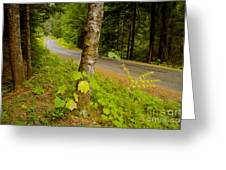 Forest Escape Greeting Card by Idaho Scenic Images Linda Lantzy