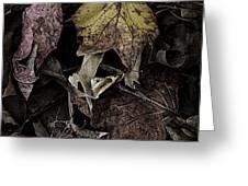 Forest Floor - Leaf 9 Greeting Card by Pete Hellmann