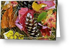 Forest Floor Portrait Greeting Card by Rich Franco