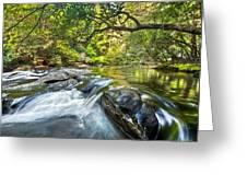 Forest Jewel Greeting Card by Debra and Dave Vanderlaan
