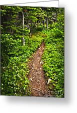 Forest Path In Newfoundland Greeting Card by Elena Elisseeva