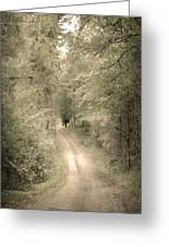 Forest Path Greeting Card by Svetlana Sewell