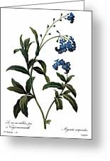 Forget-me-not Greeting Card by Granger