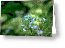 Forget-me-not Grunge Greeting Card by Darren Fisher