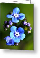 Forget-me-not Greeting Card by Noah Cole