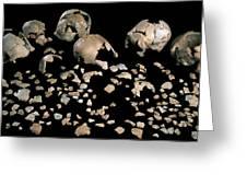 Fossilised Skulls, Sima De Los Huesos Greeting Card by Javier Truebamsf