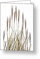 Fountain Grass In White Greeting Card by Steve Gadomski