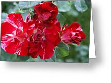 Fourth Of July Roses Greeting Card by Jacqueline Russell